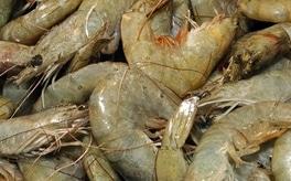 importedfood2_Shrimp.jpg